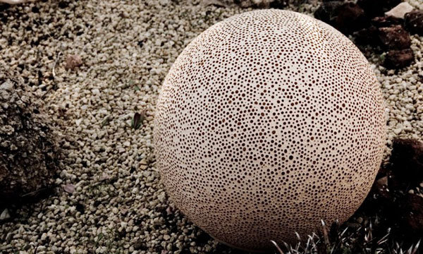 Modern and Organic Sponge Outdoor Lamp 4 Sponge Trendy Organic Lamp is an Awesome Addition Outdoors
