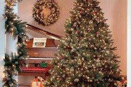 Christmas Trees Ideas 1