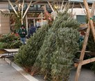 Christmas Trees Market