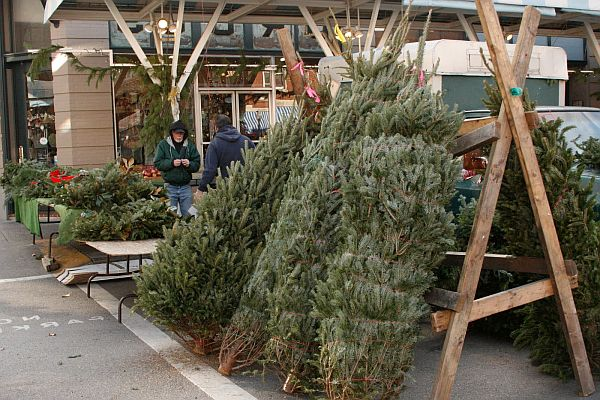 artificial christmas tree or natural - Christmas Tree Market