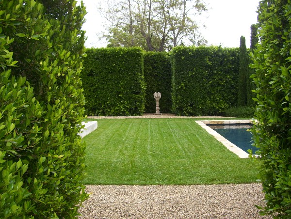 Boxwood-Green