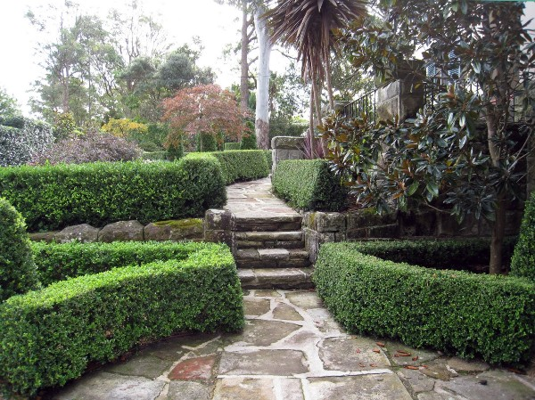 Boxwood Trim