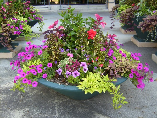 Small Flower Garden Design Ideas – Home design and Decorating