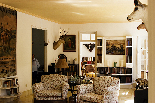 Decorating with a safari theme 16 wild ideas for Interior theme ideas