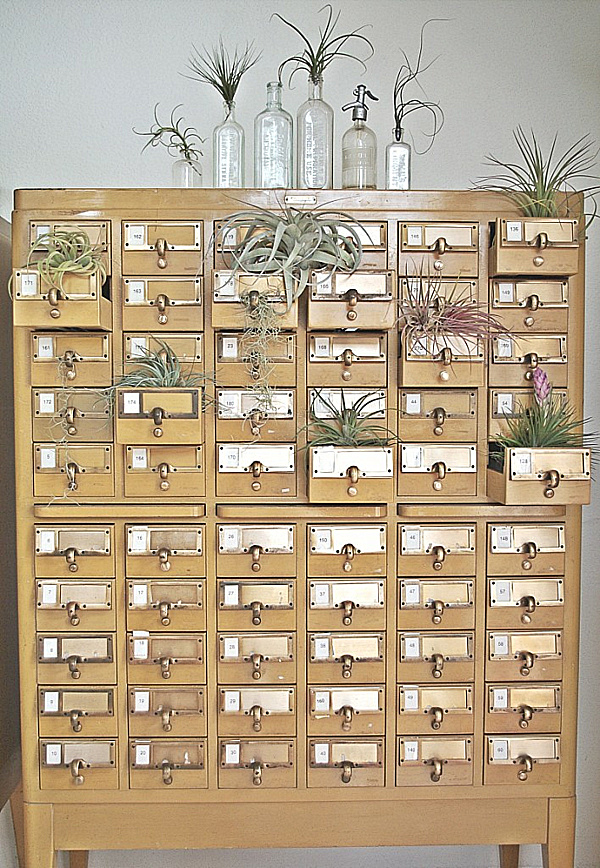 air-plant-cabinet-of-curiosities