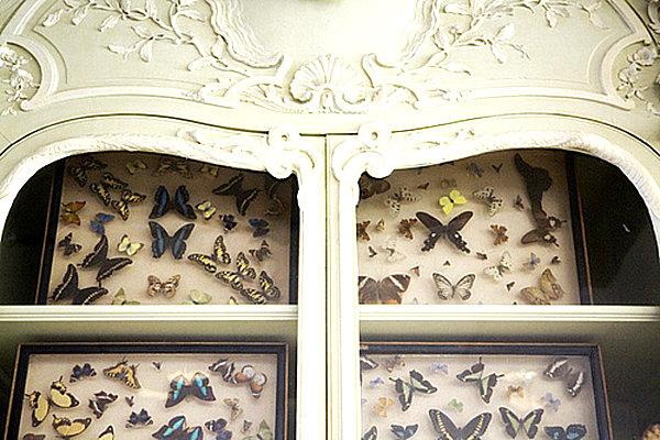 cabinet of curiosities butterflies