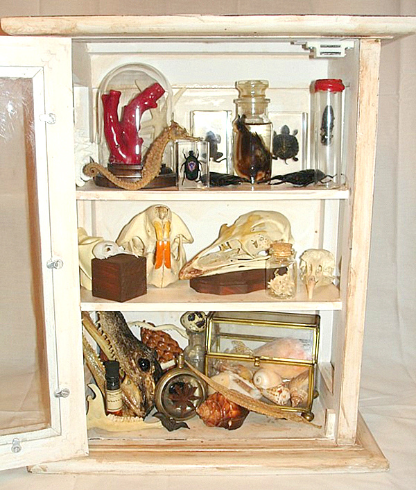 curiosity cabinet filled with specimens.png