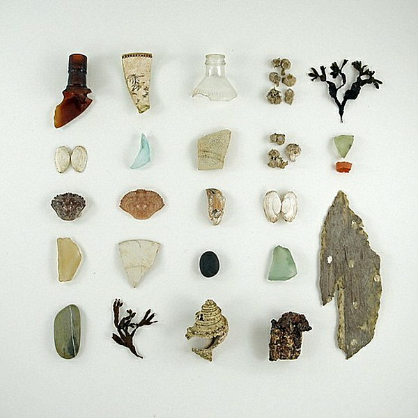curiosity cabinet specimens.png