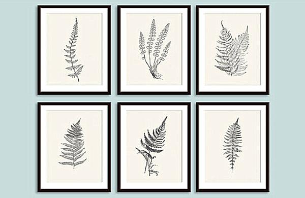 framed botanical prints.png
