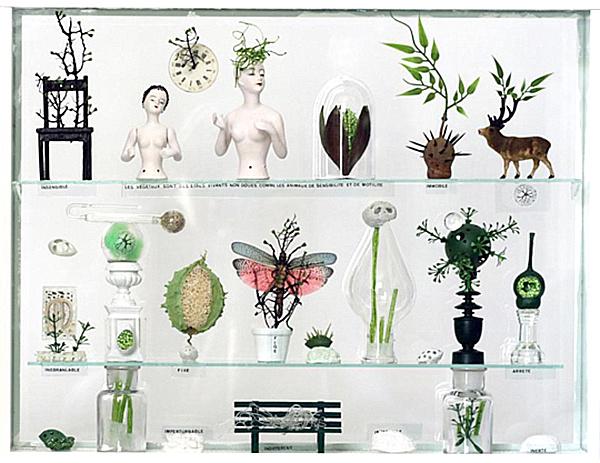 modern-cabinet-of-curiosities