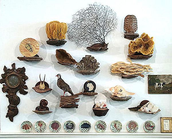 mushroom shelves curiosities