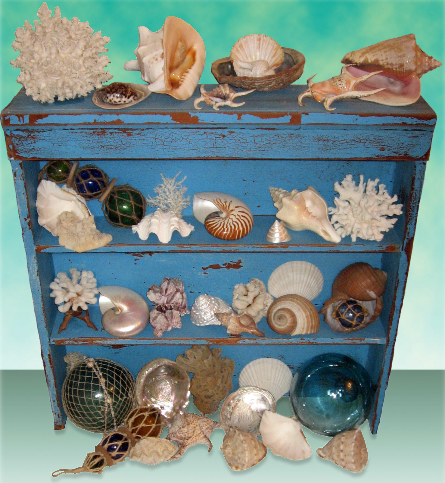 seashell cabinet of curiosities