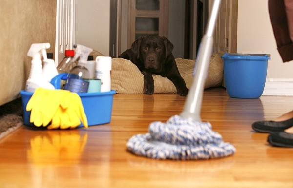 spring cleaning with dogs