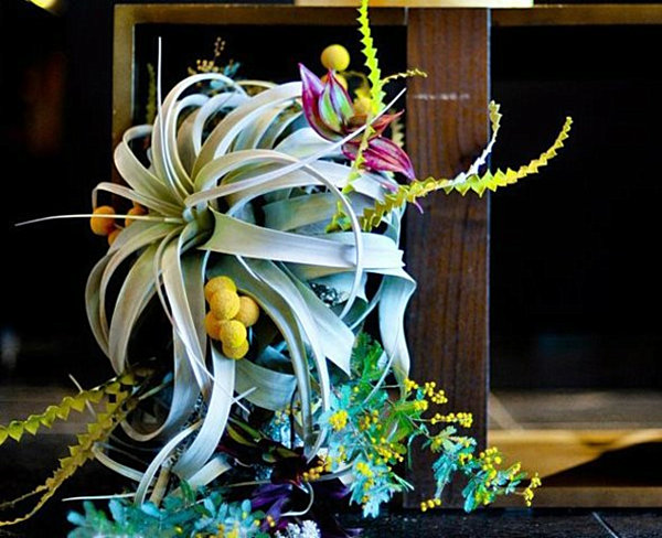 View In Gallery Air Plant Dining Table Arrangement