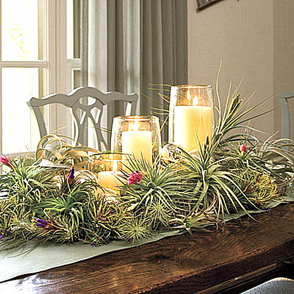 Air plant centerpiece decoist for Air plant decoration