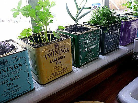 herb windowsill garden