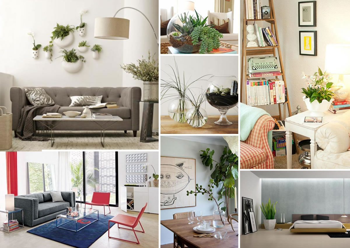 Decorating with houseplants How to decorate small house