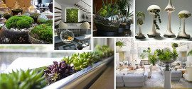 indoor gardening design and decor ideas