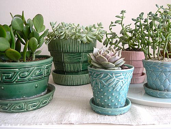 gallery for succulents in pots indoors