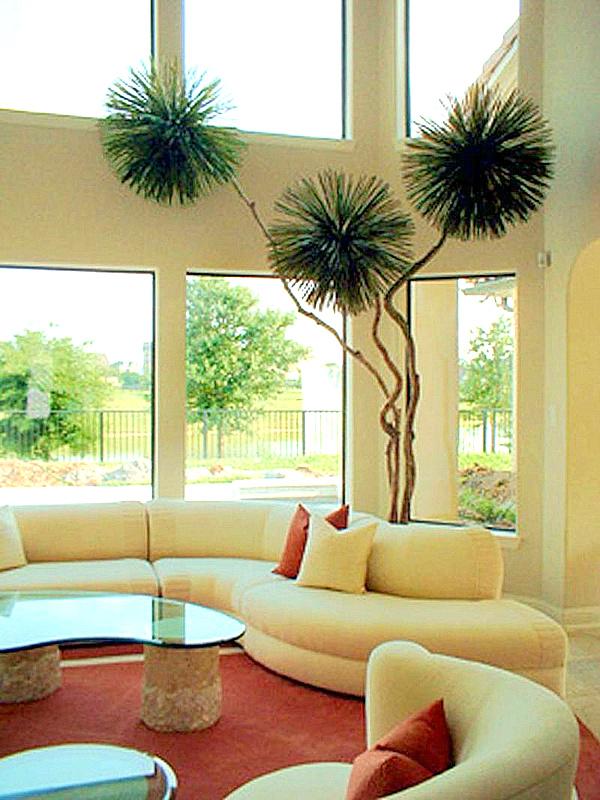 large modern houseplant.png