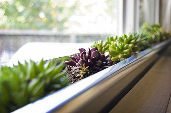 Ideal Indoor Gardening Ideas to Beautify Your Space SN41