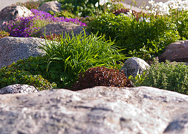 20 fabulous rock garden design ideas for Landscaping rocks and plants
