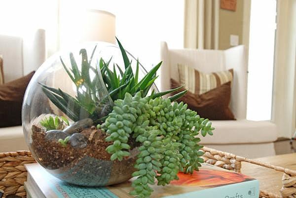 succulent-terrarium1