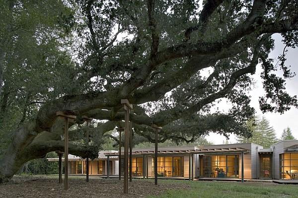 Creekside-Residence-2-floor-ceiling-windows