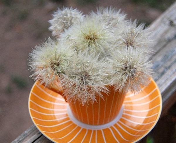 dandellion and teacup flower arrangement