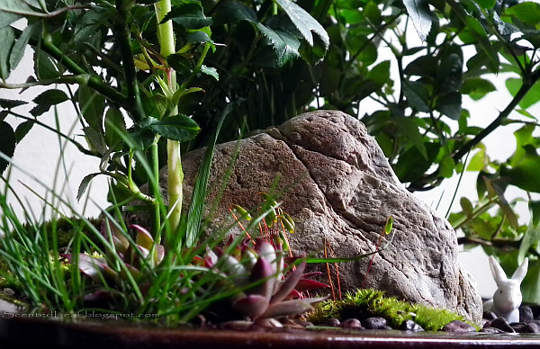 miniature garden design idea How to Create Miniature Gardens