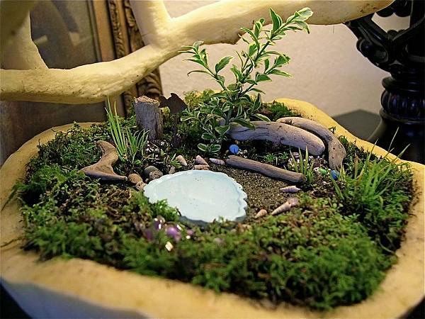 ... Miniature Garden View In Gallery Bonsai Like ...