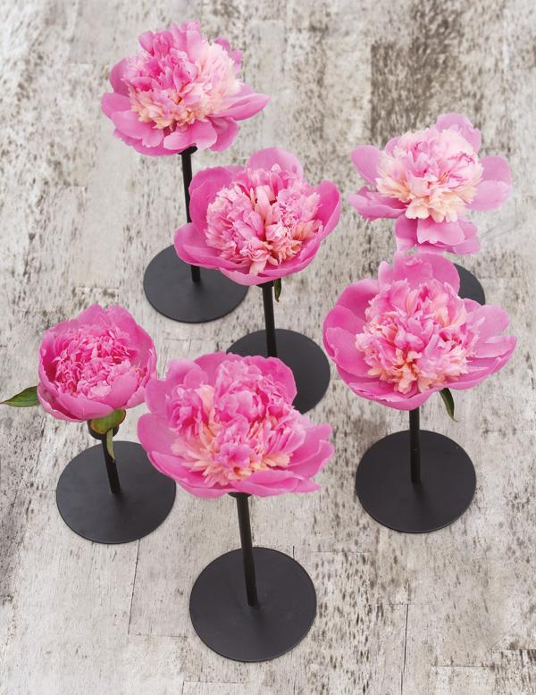peony and candlestick flower arrangement