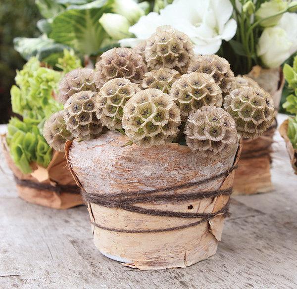 stellata pod flower arrangement