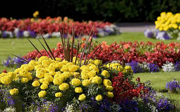 flower bed in the garden