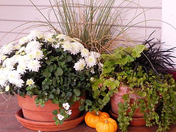 A garden vignette with small pumpkins