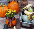 Beautiful pumpkin planters