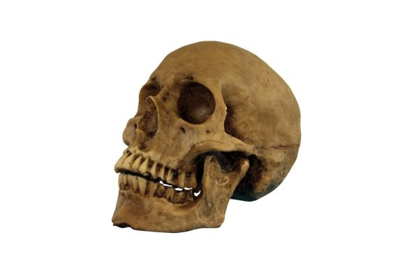 view in gallery - Halloween Skulls Pictures