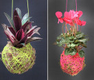 DIY moss ball hanging plants