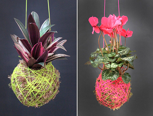 DIY moss ball hanging plants