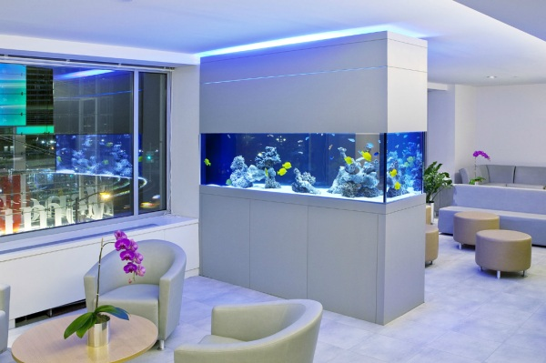 Custom aquarium in the waiting room
