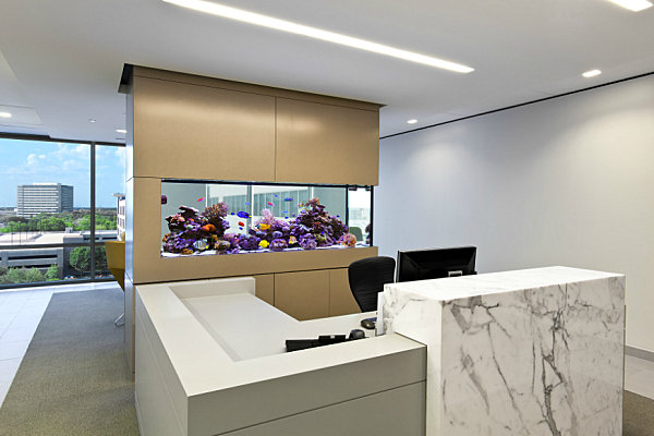 Modern office aquarium as a divider