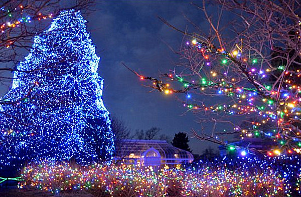 Pictures Of Christmas Trees the 10 most amazing christmas trees in the u.s.
