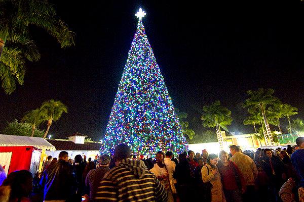 The-Delray-Beach-Christmas-Tree