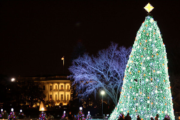 The most amazing christmas trees in u s