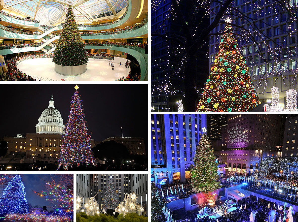 best christmas trees in the US The 10 Most Amazing Christmas Trees in the U.S.