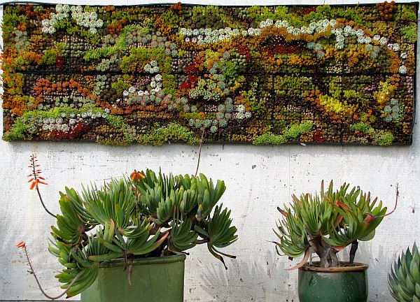 outdoor succulent wall art