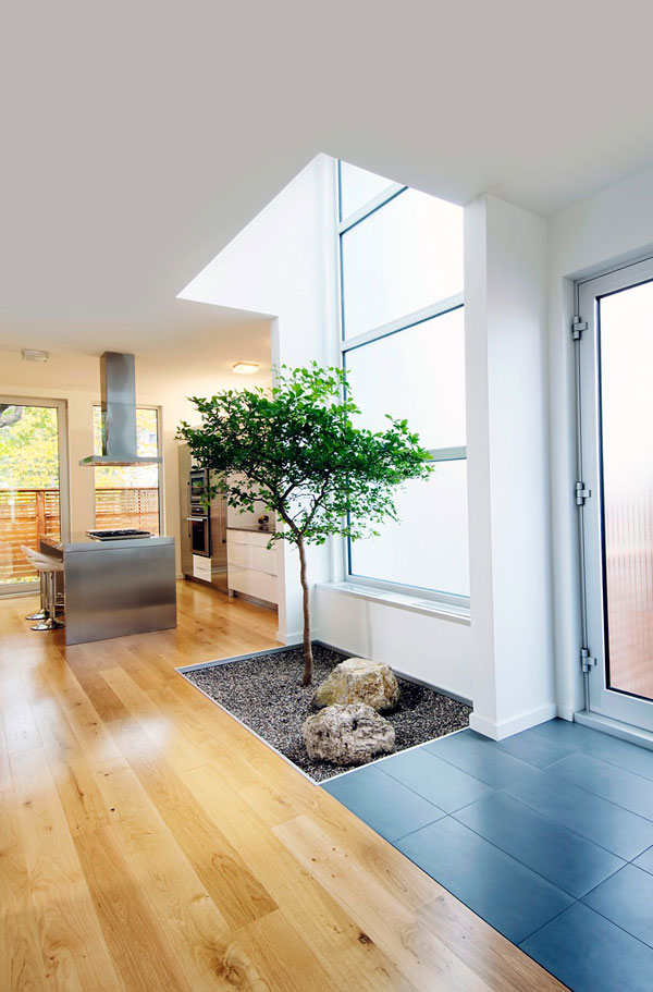 How about growing a tree indoors? It looks nothing short of cool!