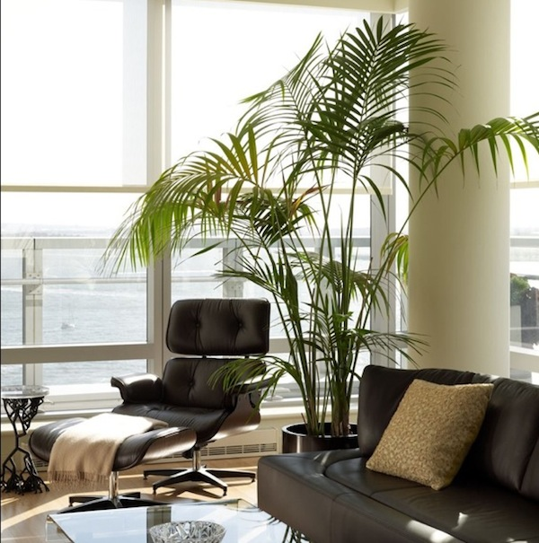 home interiors plants sitting area