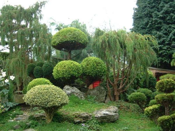 A beautiful garden showcasing the wide variety of plants one can use