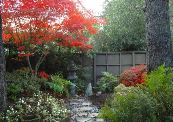 Fiery Japanese Maple in the garden offer a tasteful and colorful contrast to the green monotony